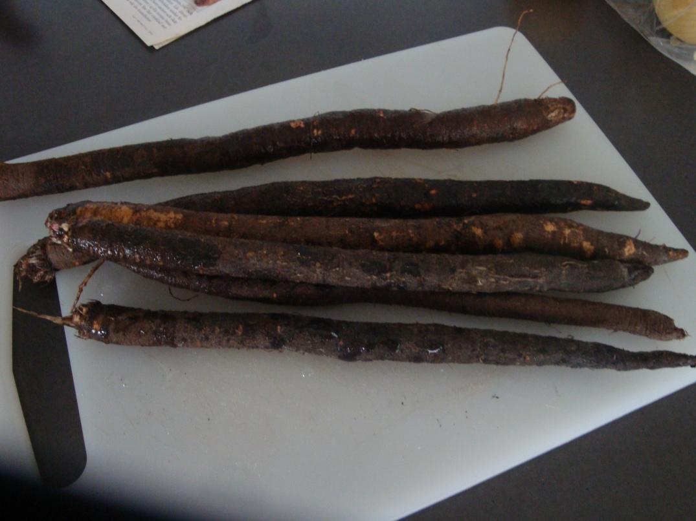 Svartrötter